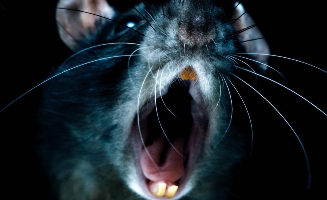 10 Interesting and Scary Facts about Rodents