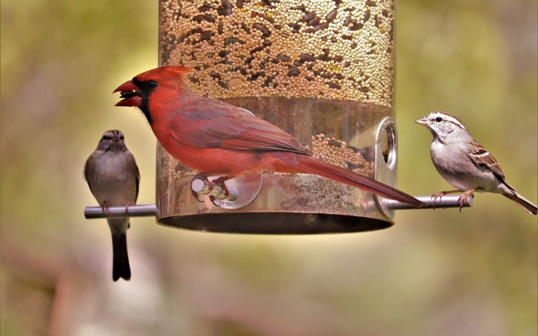 That Bird Feeder….It's a Problem