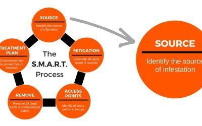 The S.M.A.R.T. Process Step 1 – Identifying The Source Of Infestation