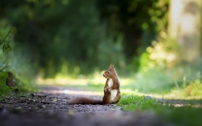 7 Interesting Facts About NW Squirrels